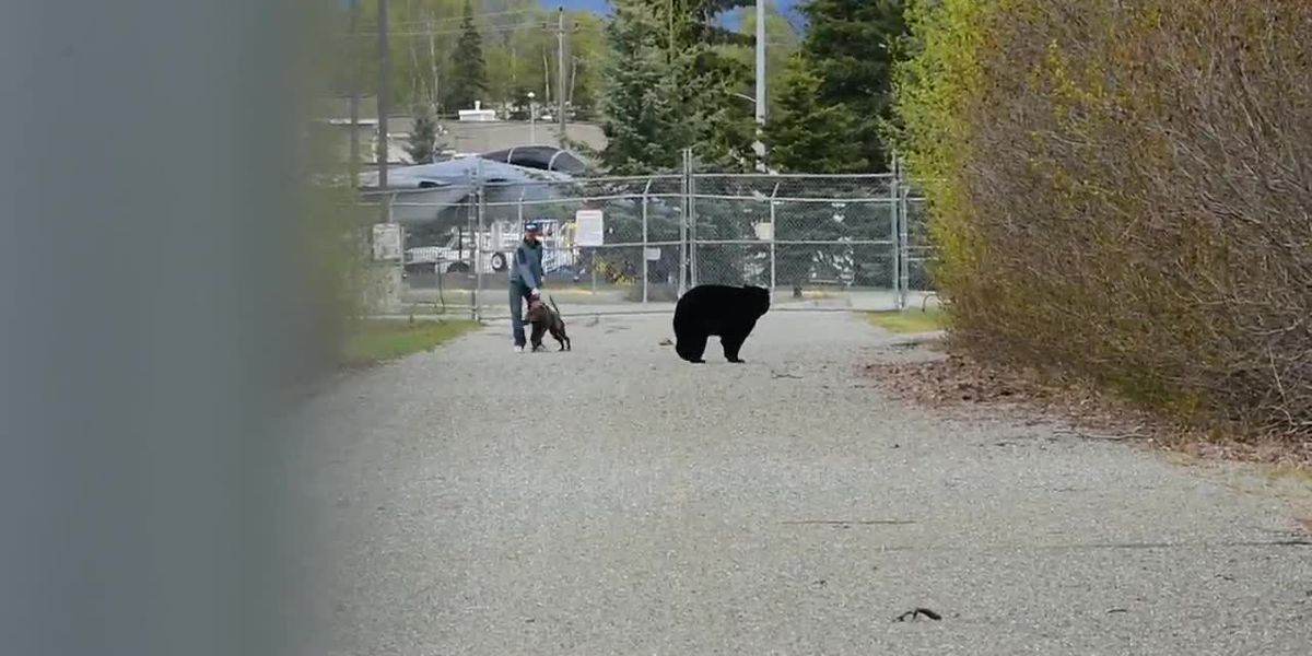 Dogs fight with bear at Alaska park