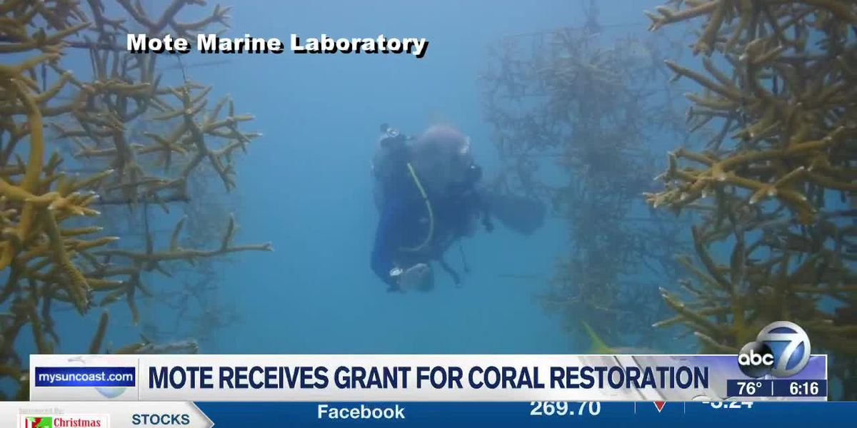 Mote receives federal grant to help restore and save one of Florida's iconic Coral Reefs