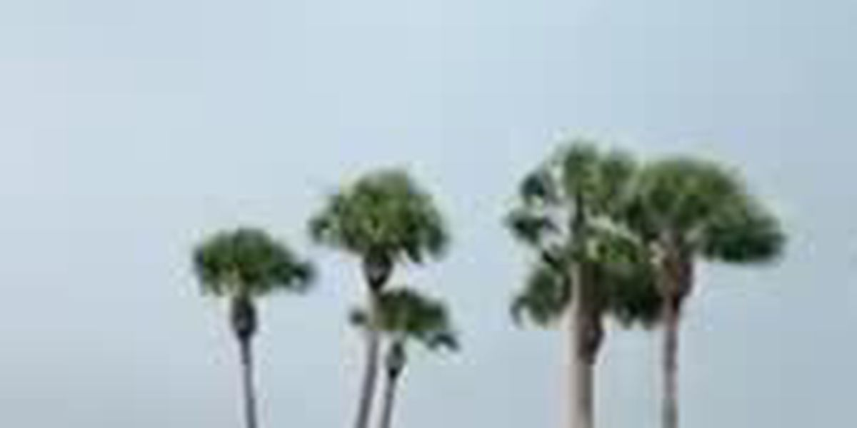 VIDEO: Water spout moves right over Siesta Key bridge