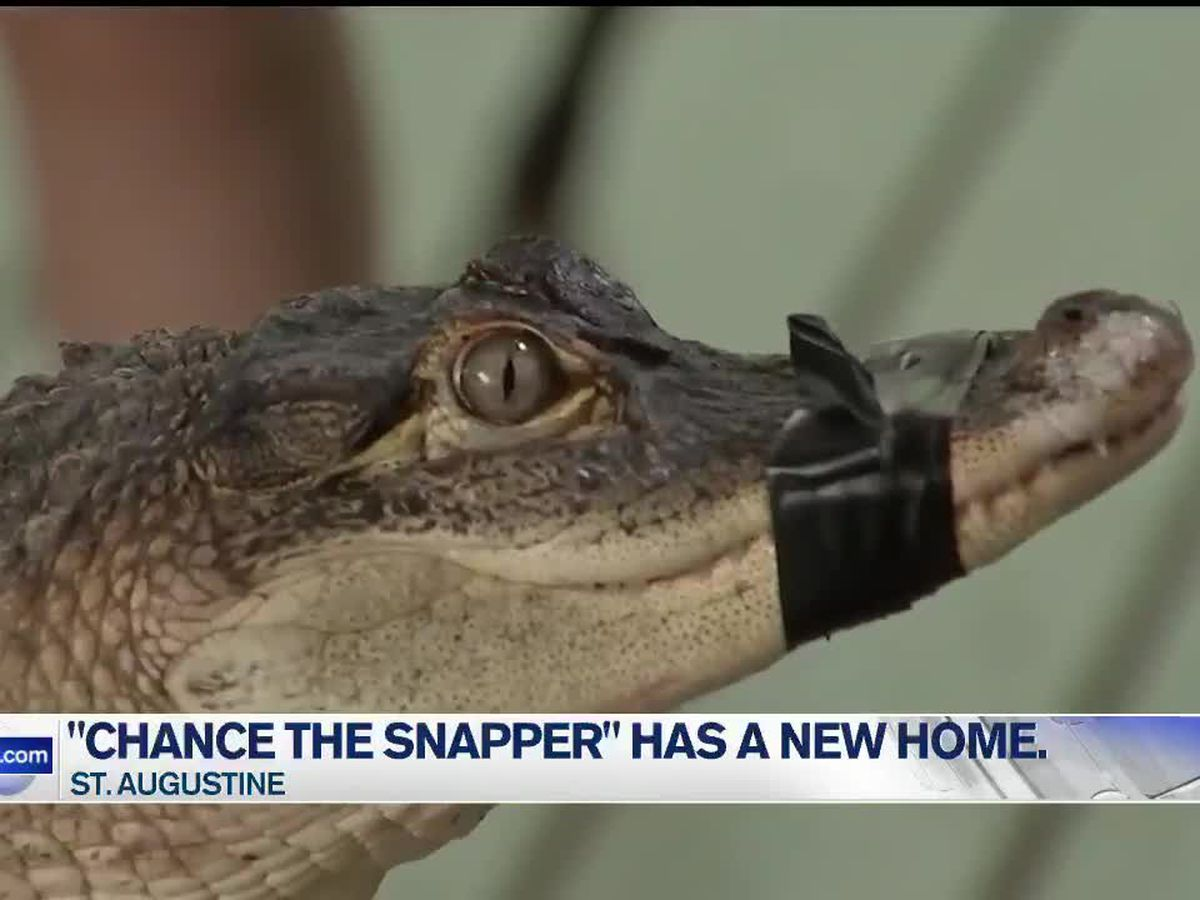 """Chance the Snapper"" has a new home"