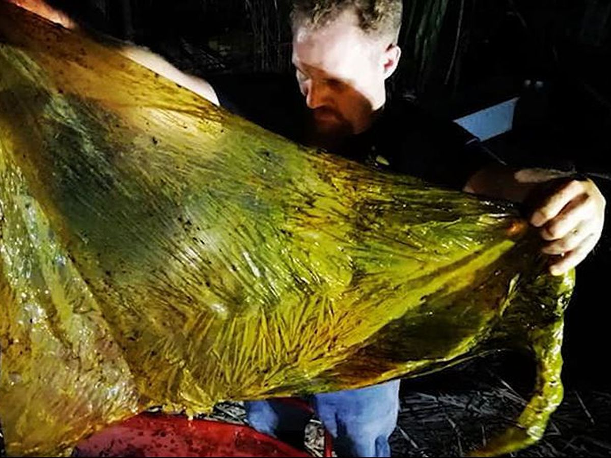 Dead whale found in Philippines with 88 pounds of plastic in stomach