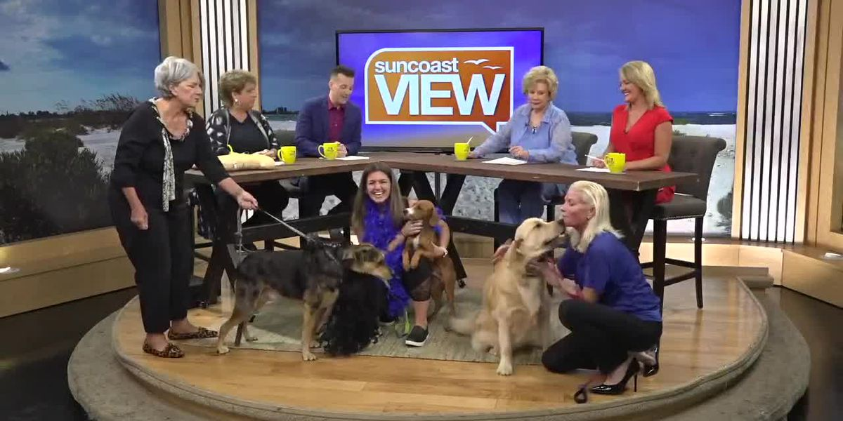 Our Stage Becomes a Runway for the Top Dog Fashion Show! | Suncoast View