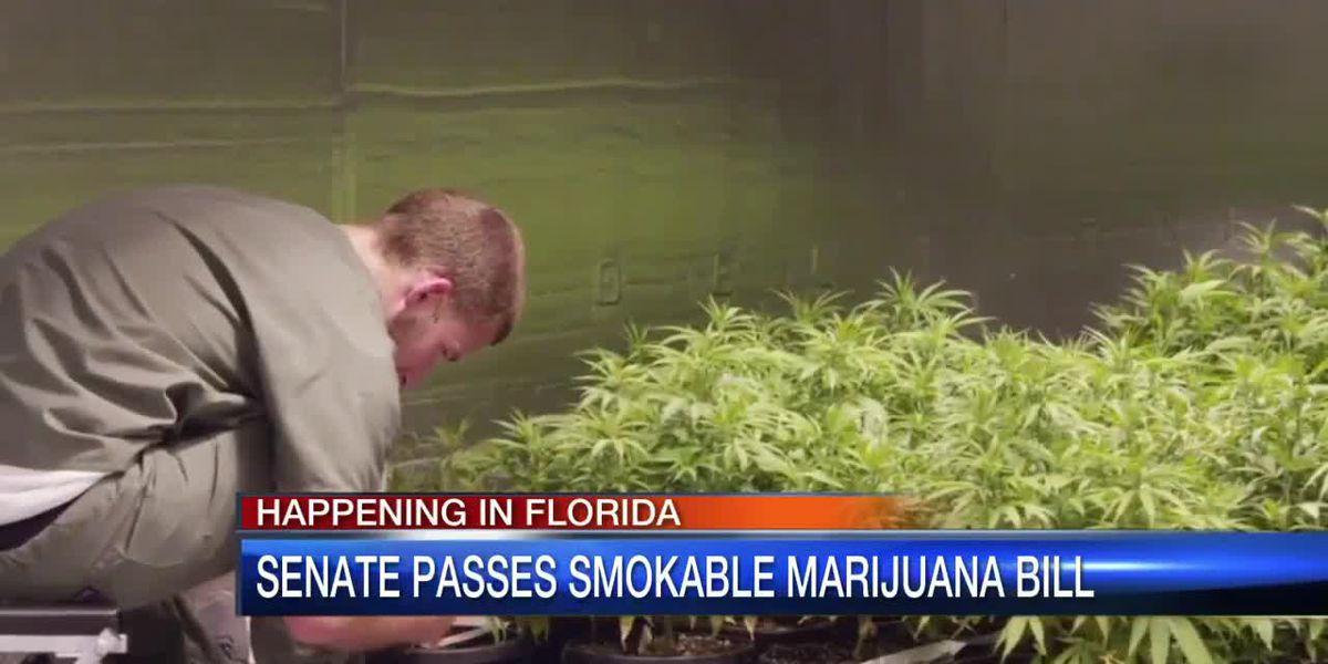 Senate repeals pot smoking ban, House to vote next week