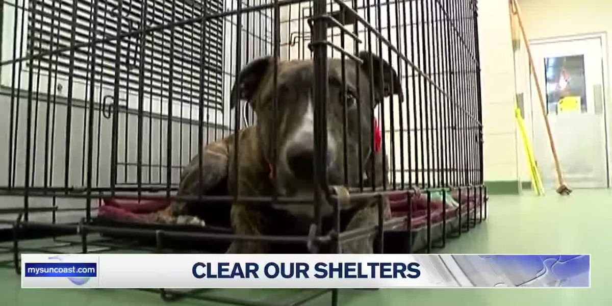 Manatee County Animal Services waiving adoption fees for 'Clear Our Shelters' event