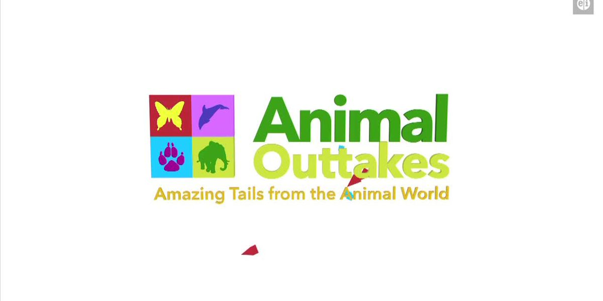 Animal Outtakes - Sunday July 19, 2020