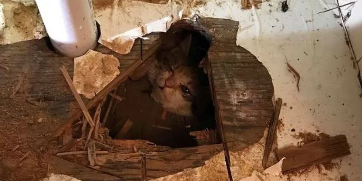 Kitten hanging by neck rescued from crawl space