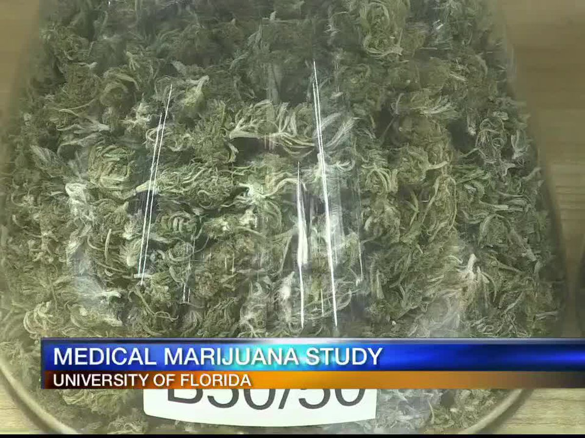 University of Florida taking lead on medical marijuana study