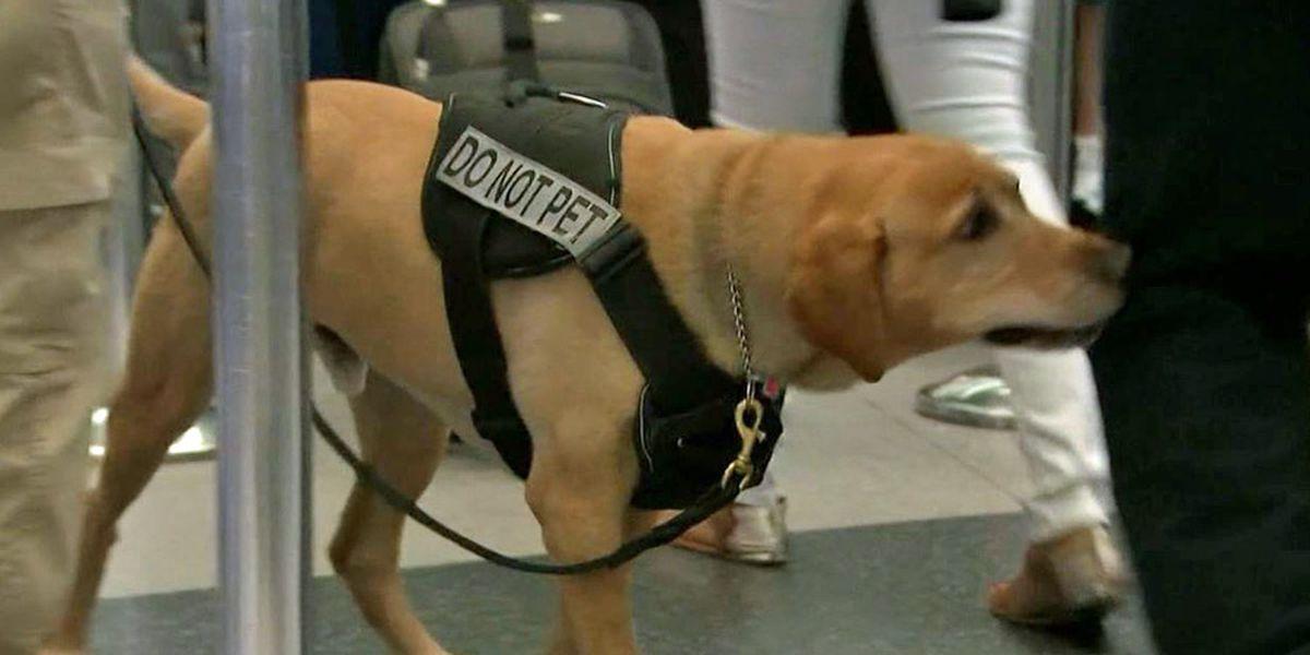 TSA creates calendar dedicated to the hard-working canines on staff