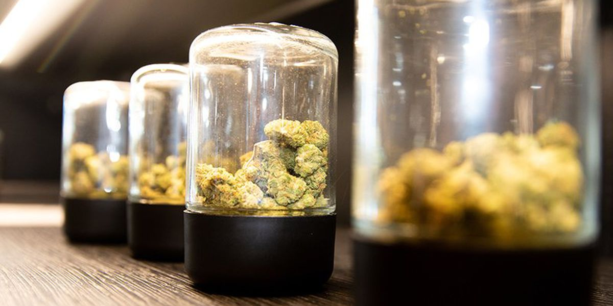 Pot potency bill to be debated Tuesday