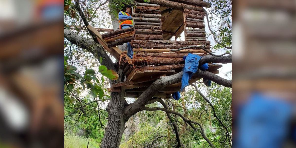 Police find burglary suspect living in 'very well-built and modern' treehouse