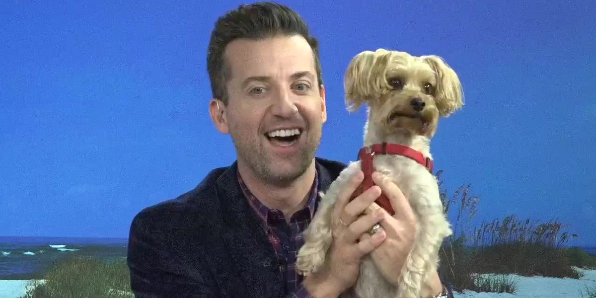 What You Should Know When Leaving a Pet with a Sitter | Suncoast View