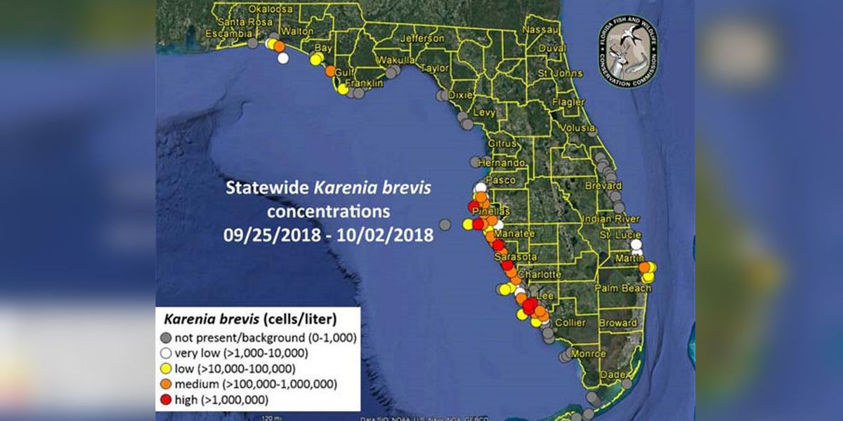 MIDWEEK RED TIDE UPDATE: Overall decrease seen along the Suncoast