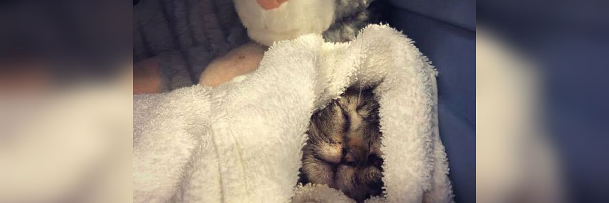Abandoned kitten at Manatee County Animal Services run over by a car