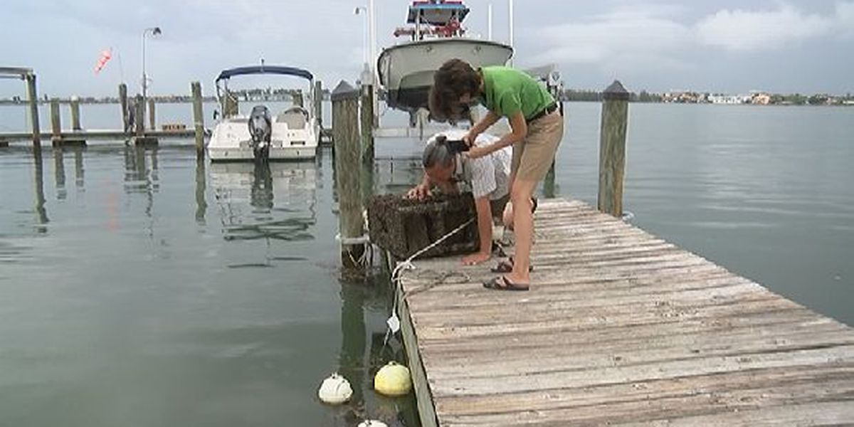 Mote Marine Laboratory launches series of new studies to combat red tide