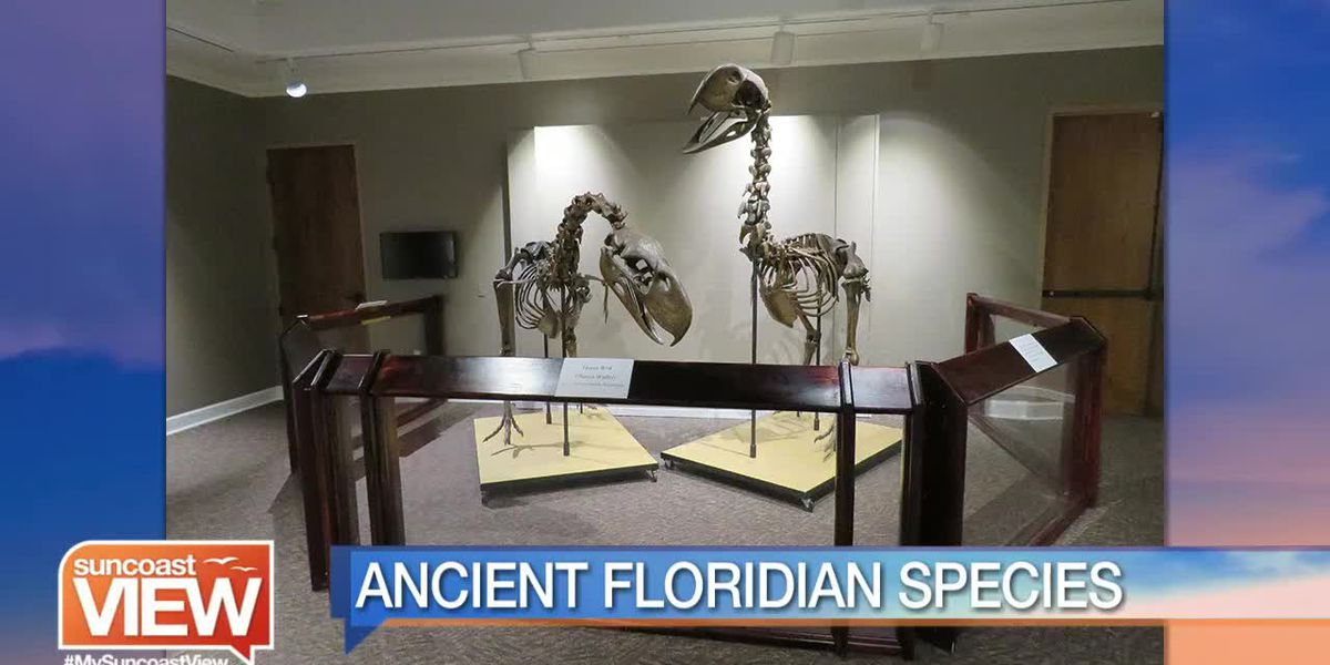 """South Florida Museum Takes Us Back in Time with """"Finding Florida"""" 