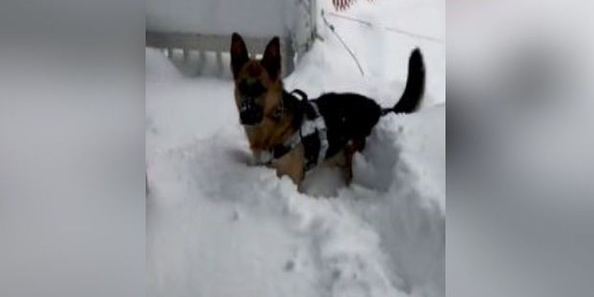 Precious puppy plays in record-breaking snow