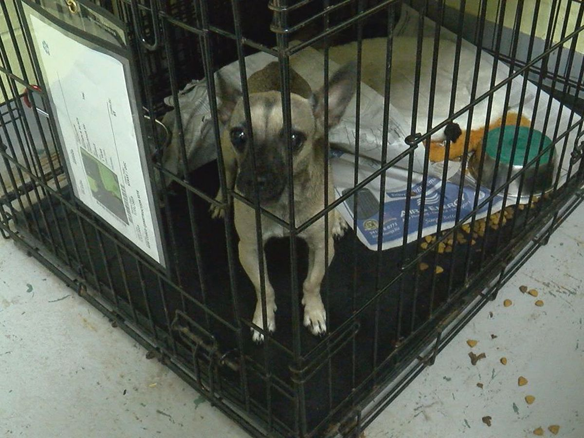 Manatee County Animal Services experiencing serious overcrowding
