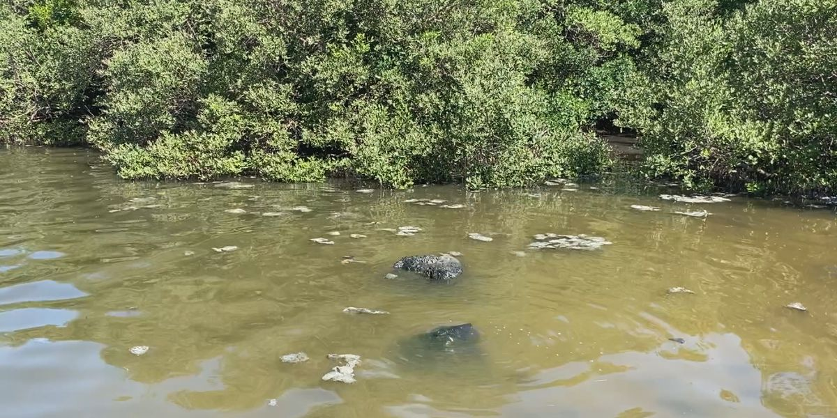Crews stop massive wastewater spill, state's DEP says as much as 28-million gallons could have spilled near Sarasota Bay