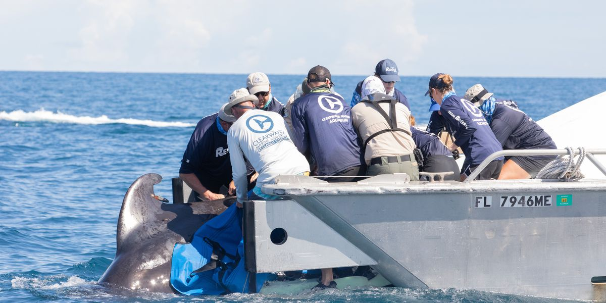 VIDEO: Two pilot whales released after being rescued