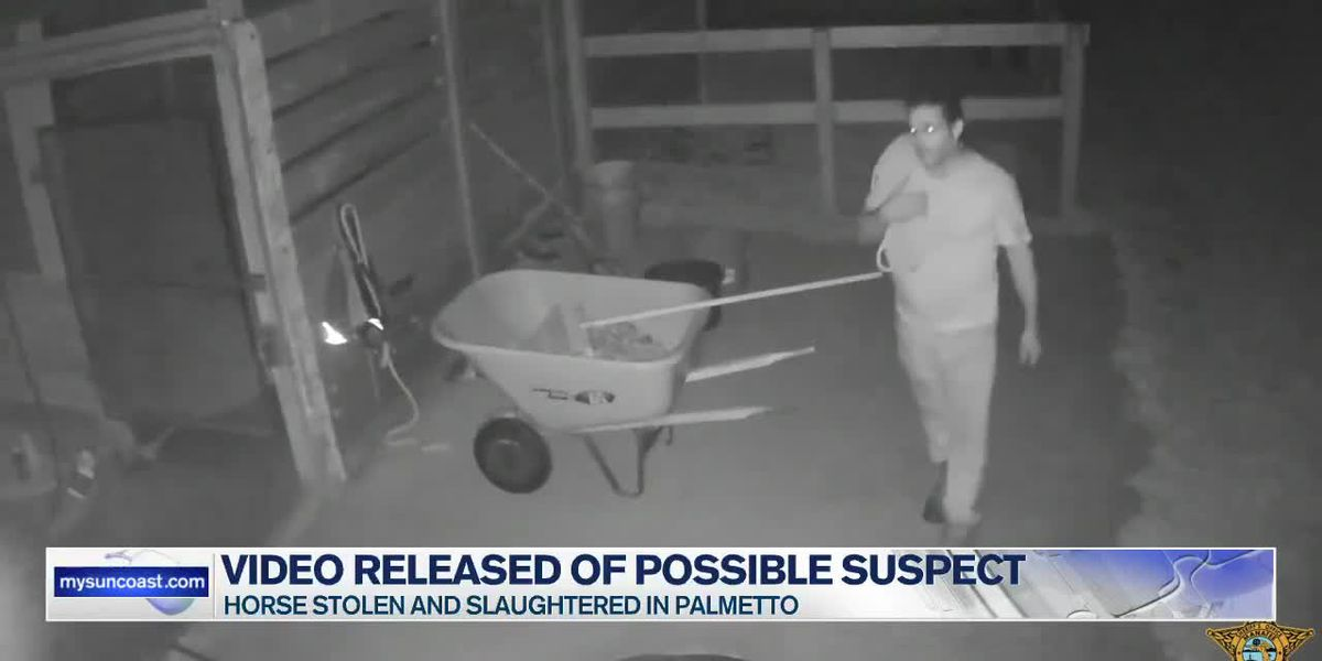 Video Released of Possible Horse Theft Suspect