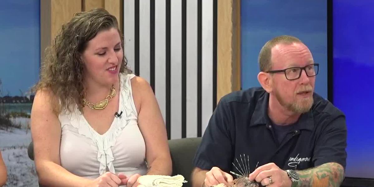 Learn How Lionfish Infest Our Waters, And Local Chefs Turn Them Into Tasty Meals | Suncoast View