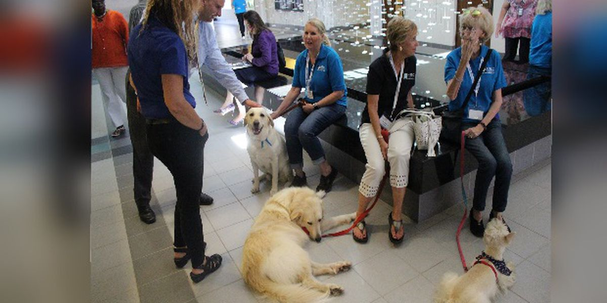 Humane Society bring dogs to City of Sarasota Offices