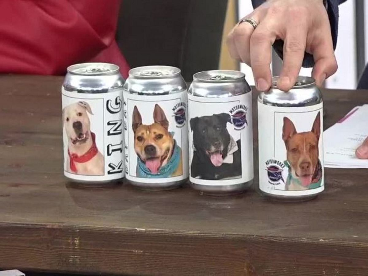 Motorworks Brewing collaborating with Manatee County Animal Shelter to find forever homes for dogs