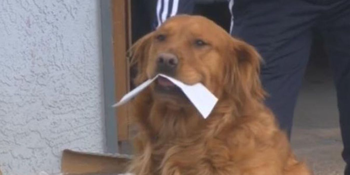 Dog delivers groceries to Colo. neighbor self-isolating due to coronavirus