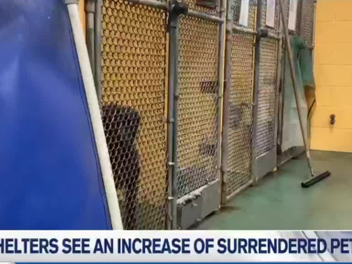 Animal shelters see an increase of surrendered pets