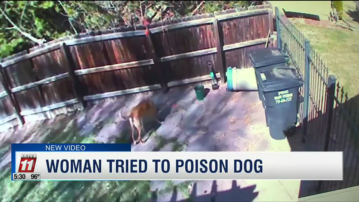 Woman tried to poison dog and it was caught on camera