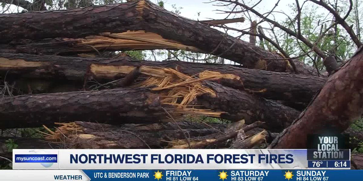 Northwest Florida forest fires