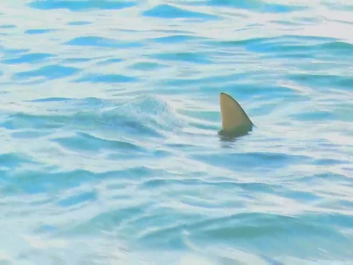 Wildlife officials eye shark encounters