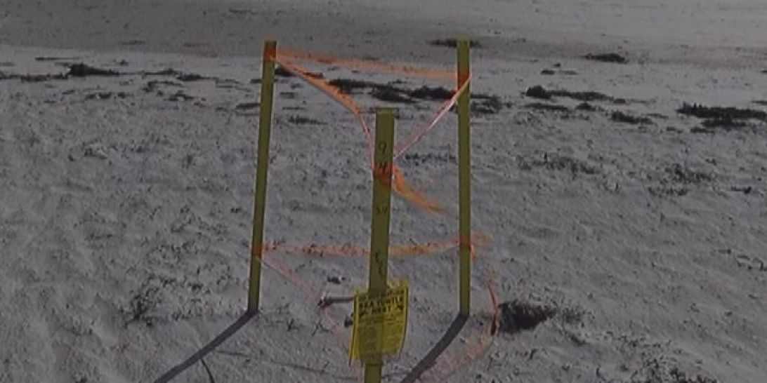 It's been a record-breaking sea turtle nesting season in Sarasota County