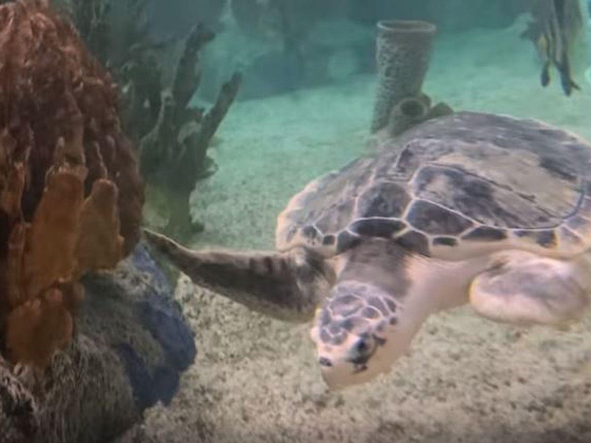 Mote Marine Laboratory & Aquarium holds sign-up for virtual run