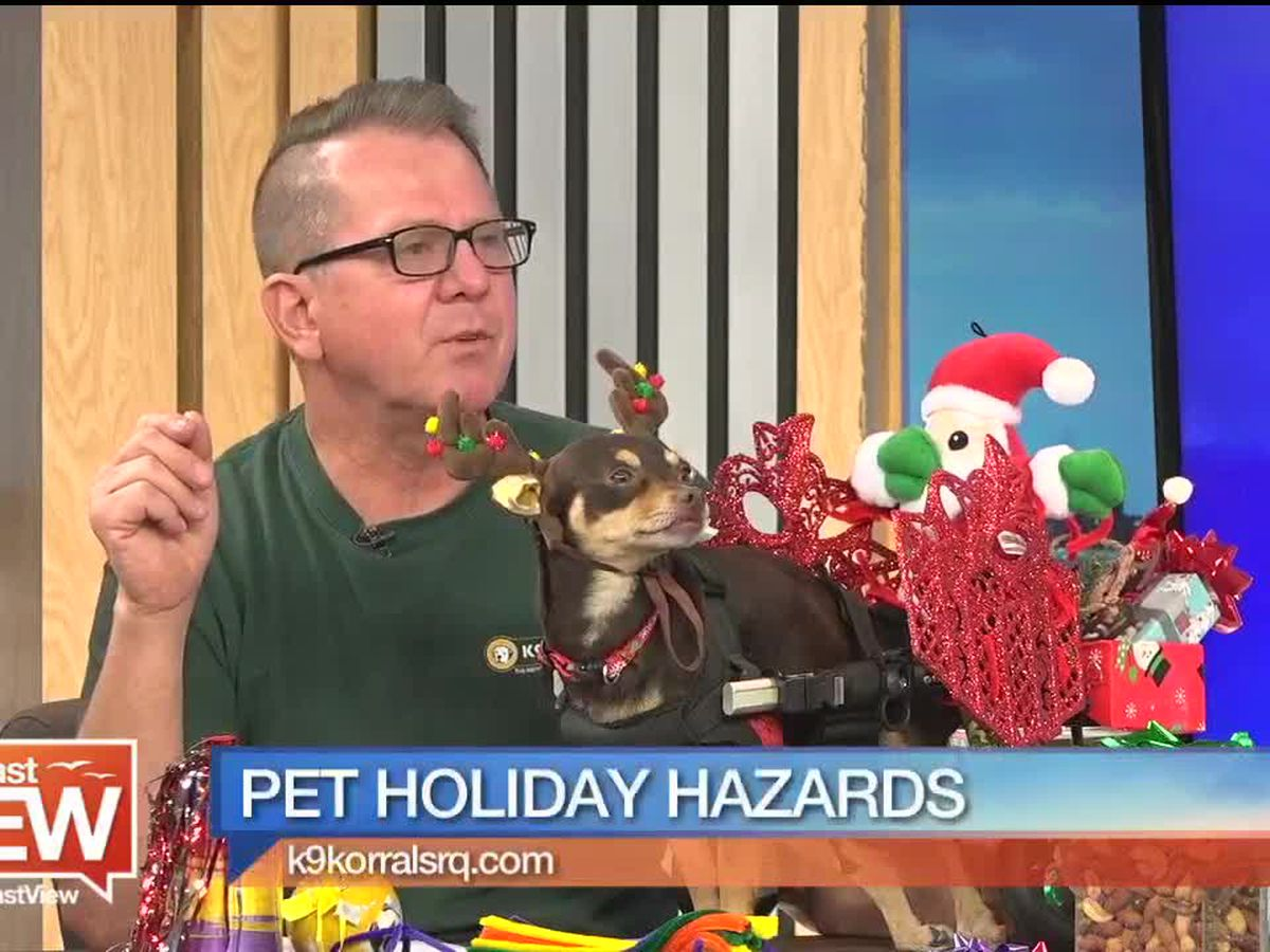 Pet Holiday Hazards That You Should Know About with K9 Korral | Suncoast View