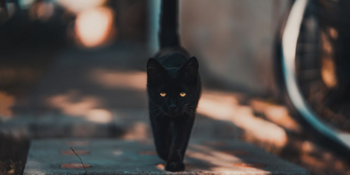 Black cat scampers on field during Monday Night Football