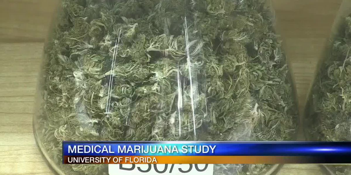 University of Florida taking lead on medical marijuana study