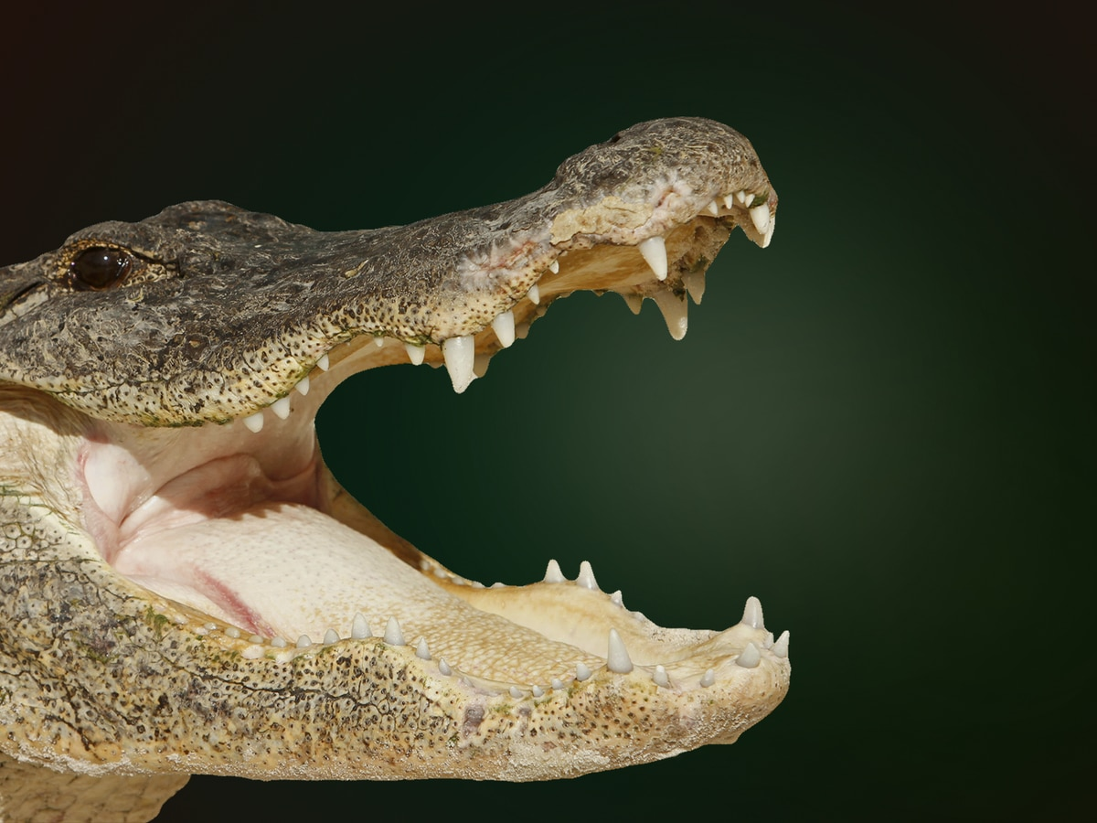 Man found eaten by alligator actually died of meth overdose