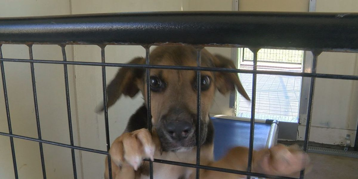An influx of dogs arrive at Lakewood Ranch animal rescue