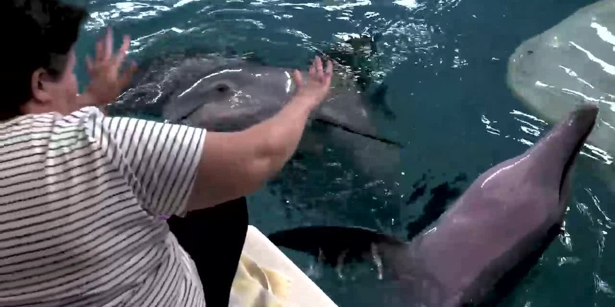 Bradenton woman who survived brutal attack fulfills wish, meets Winter the Dolphin