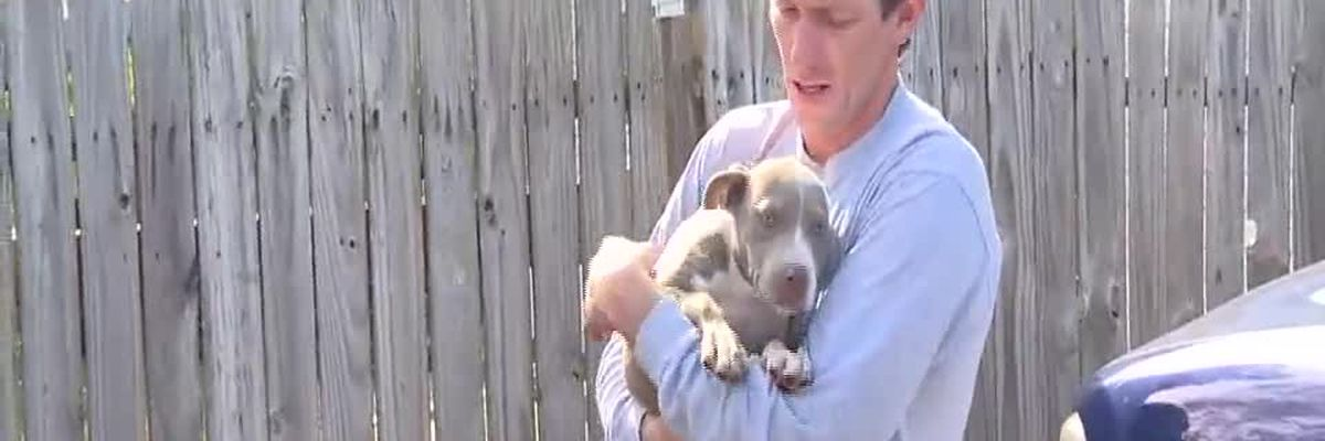 VIDEO: Dog owner speaks after teen, man attacked by pack of bulldogs in Florida community