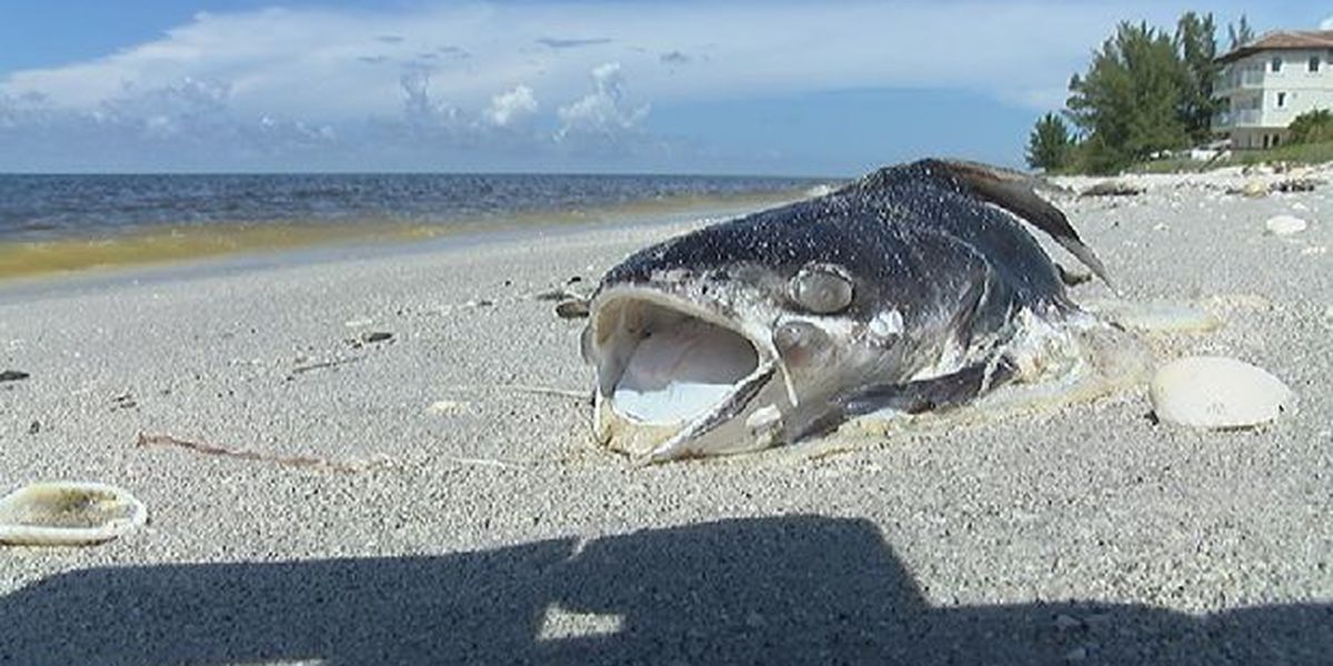 Gov. Scott funding red tide projects at Mote, FWC after protest