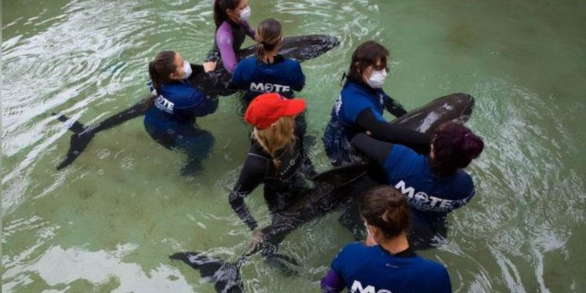 Third whale rescued along Suncoast dies