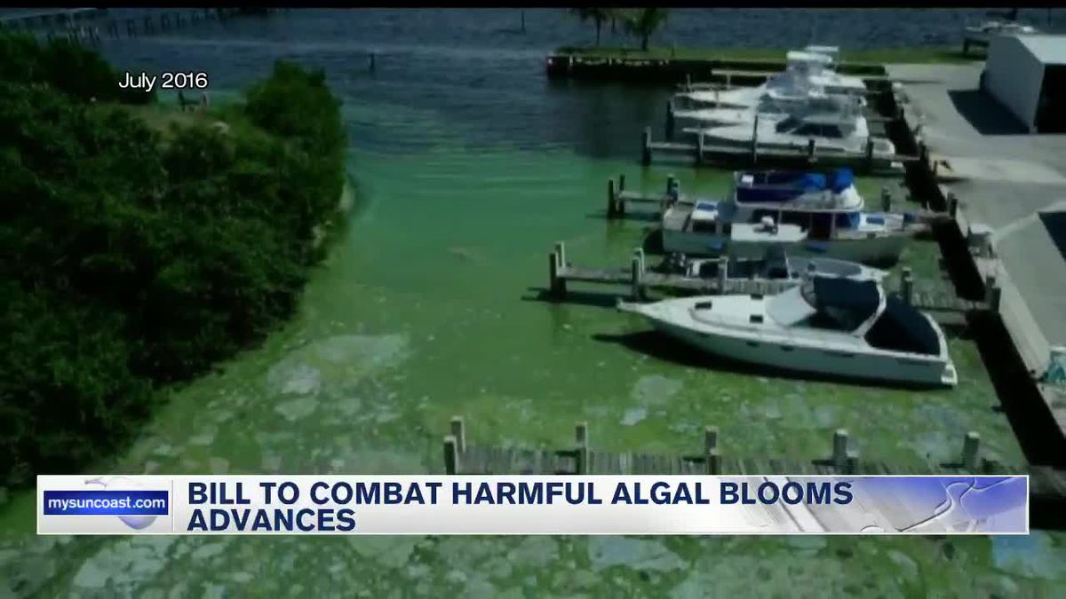 Bill to combat harmful algal blooms advances