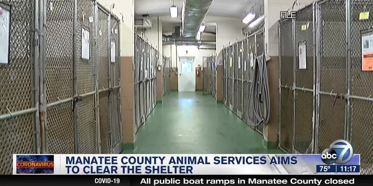 Manatee County Animals Services Aims to Clear the Shelter
