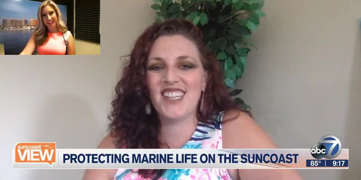 How to protect sea turtles & mating manatees | Suncoast View
