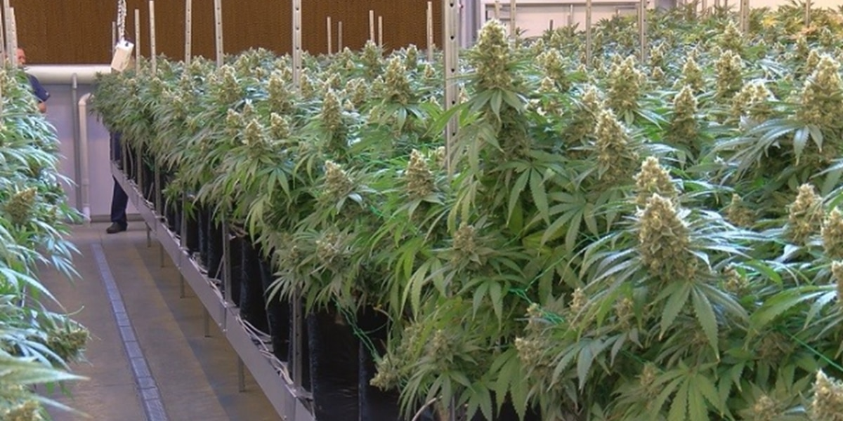 Legislators moving forward to approve smokable marijuana