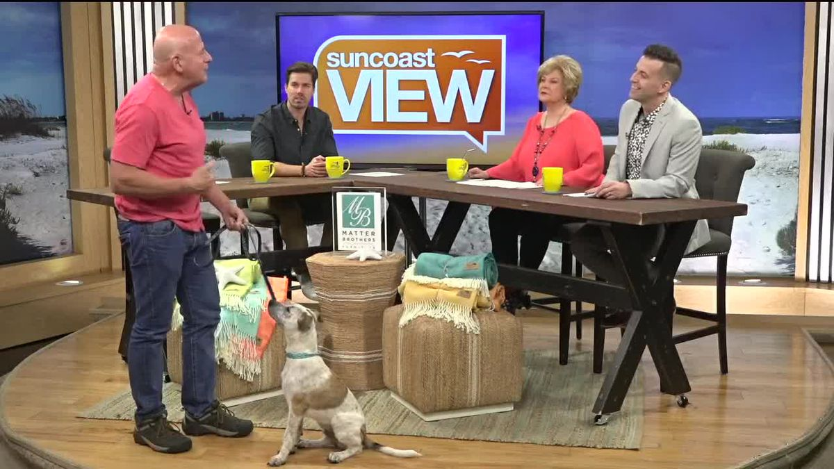 TV Dog Trainer Joel Silverman Helps Up Keep All Four Paws on the Ground | Suncoast View
