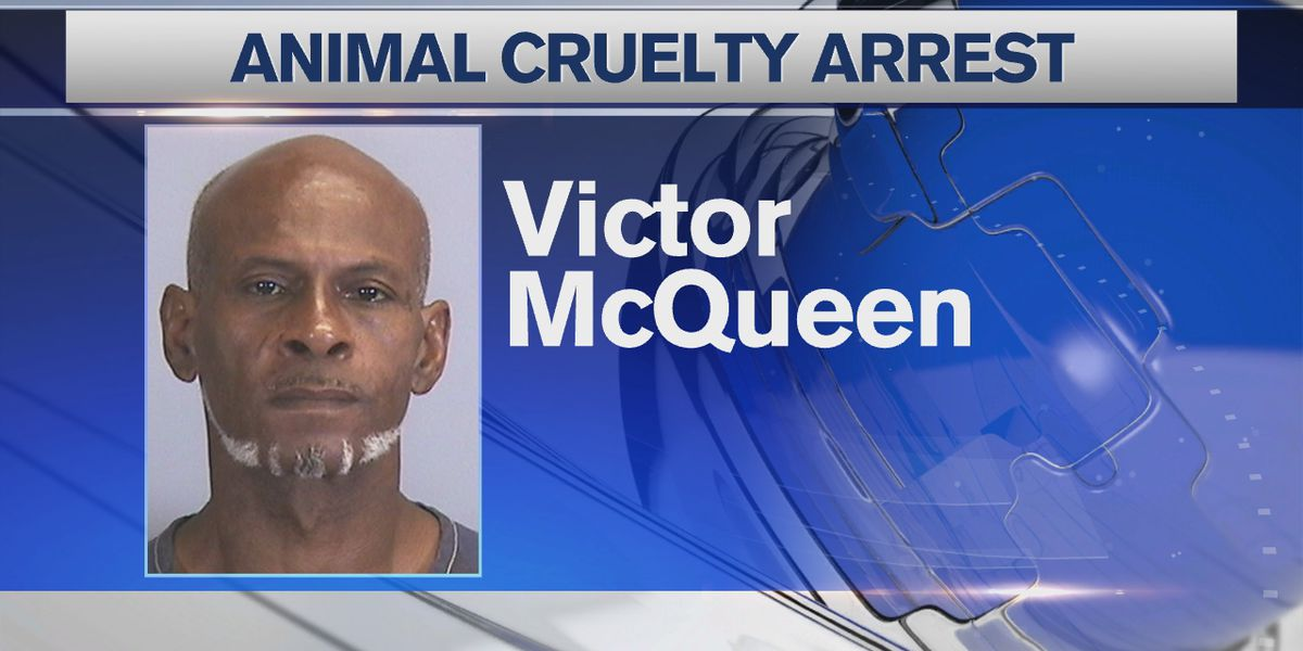 Bradenton man arrested more than a year later for animal cruelty involving dogs