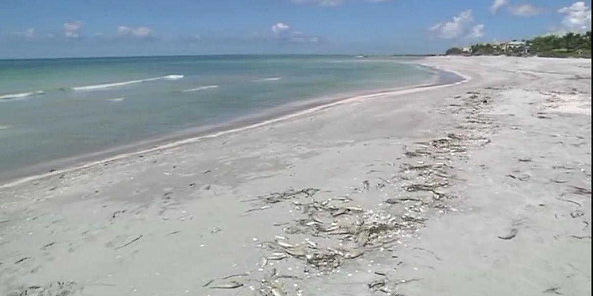 Gov. DeSantis reforms Red Tide Task Force to battle outbreaks